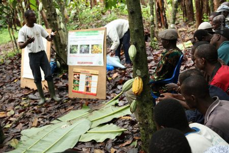 Report reveals gains in Barry Callebaut's sustainable cocoa sourcing