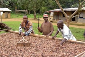 Cargill distributes €1.4m in premiums to Cameroonian cocoa farmers