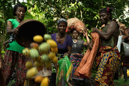 Fairtrade supports moves from Ghana and Ivory Coast to raise cocoa farmer payments