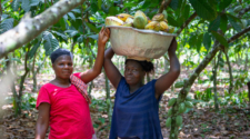 Ferrero, Mars, Mondelez and Nestlé join Fairtrade in calls for EU cocoa supply chain due diligence