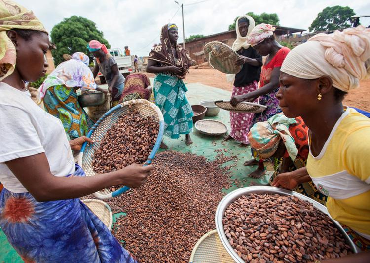 Fairtrade campaigners call on PM Boris Johnson to support cocoa farming sector