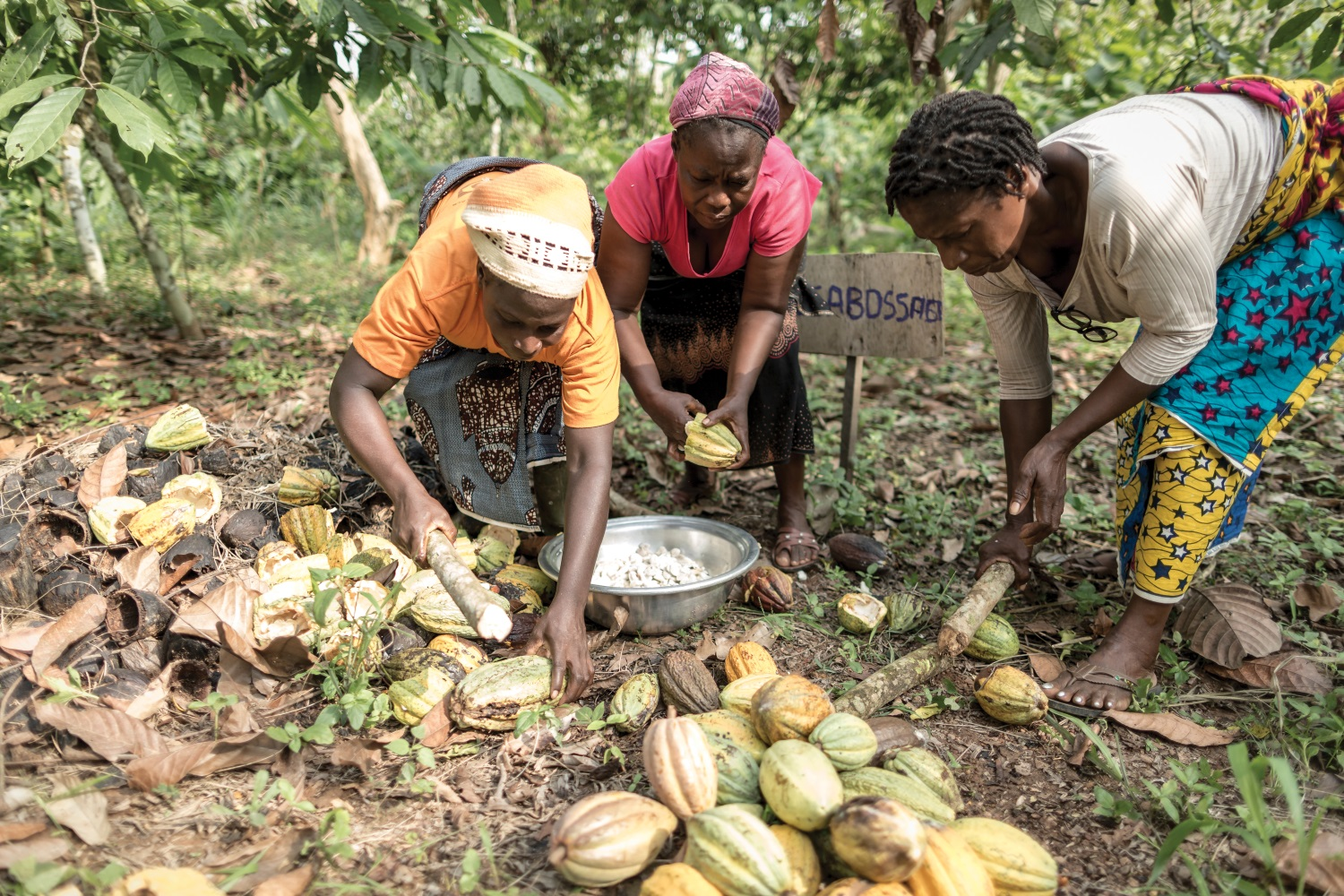 Fairtrade report claims key progress on training West African cocoa farmers
