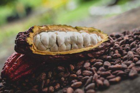 Mars Wrigley creates $1 billion fund for improving cocoa sustainability