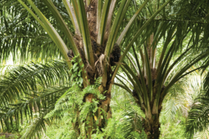 DuPont moves to sustainable palm oil emulsifiers