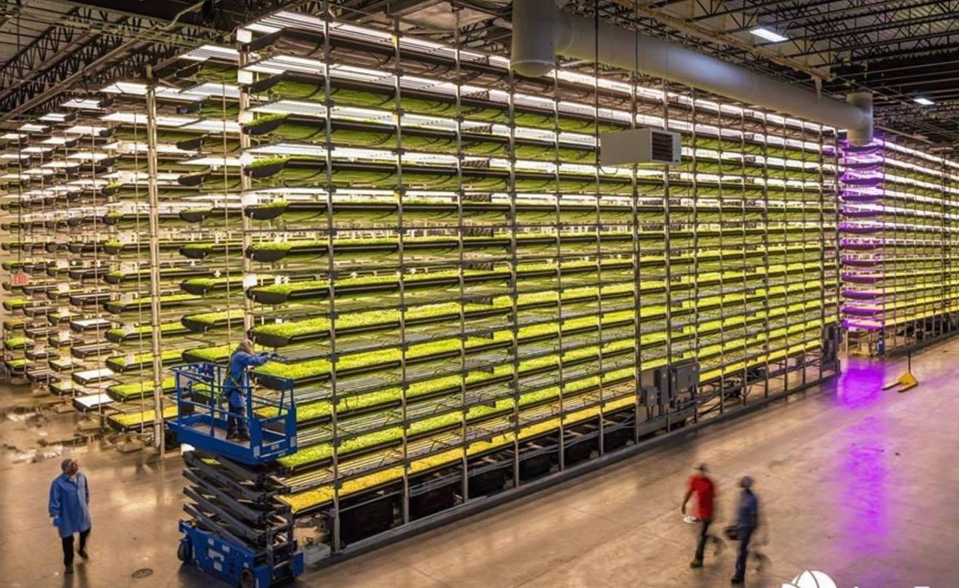 Cargill targets major cocoa breakthrough with Aerofarms B-Corp vertical farming research