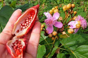 Frutarom's annatto colour certified organic