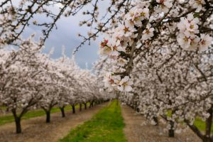 The Almond Board of California commits to four new sustainability pledges