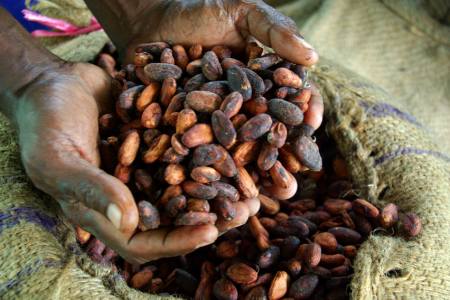 Cocoa farmers feel the benefit