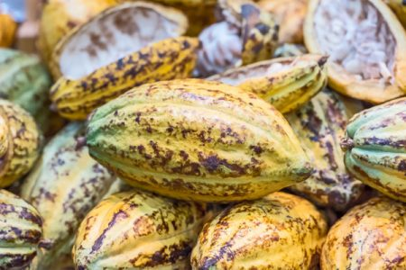 Payment increases to Ivory Coast cocoa farmers offer industry hope