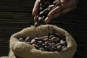 cocoa-beans-499970_1280