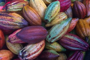 United Cacao receives environmental certification