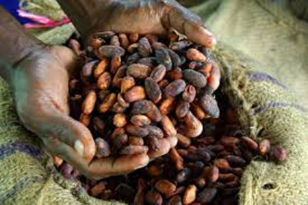 Cocoa Life in Indonesia