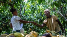 Fairtrade's COP26 paper calls on global governments to back smallholder farmers over climate solutions
