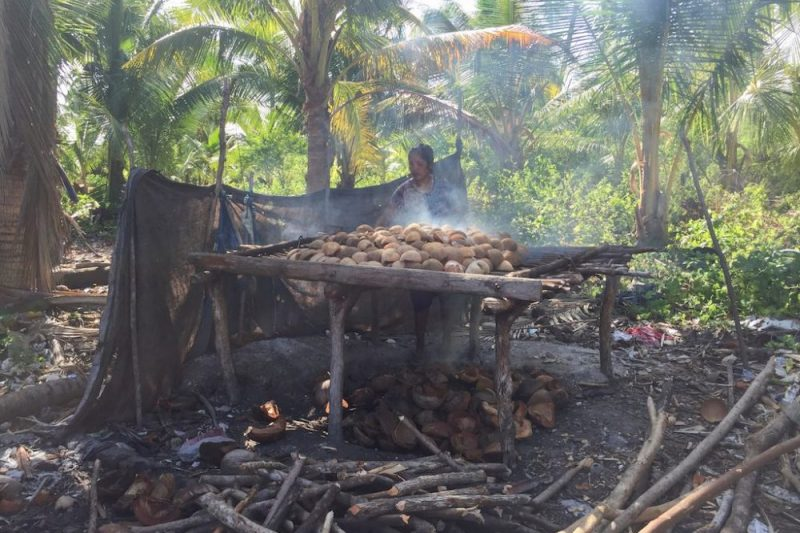 Cargill joins initiative to deliver certified coconut oil for Philippines and Indonesia