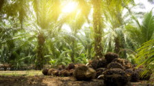 Cargill's target to eliminate deforestation from its palm oil supplies remains on track