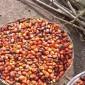 palm oilk