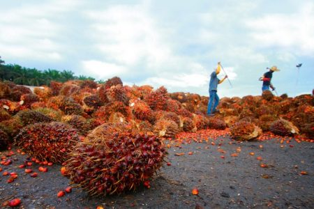 Sustainably sourced palm oil could provide confectionery sector answers