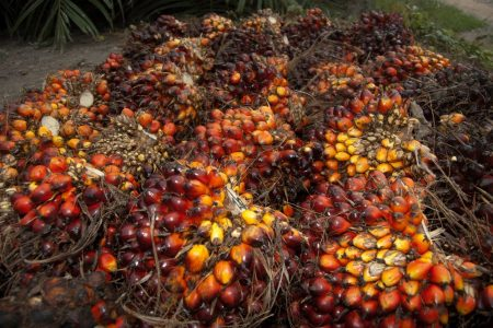 Nestlé pilot scheme aims to tackle human rights and labour abuses in palm oil supply