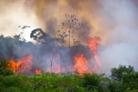 The World Cocoa Farmers Organisation expresses concerns over Amazon fires